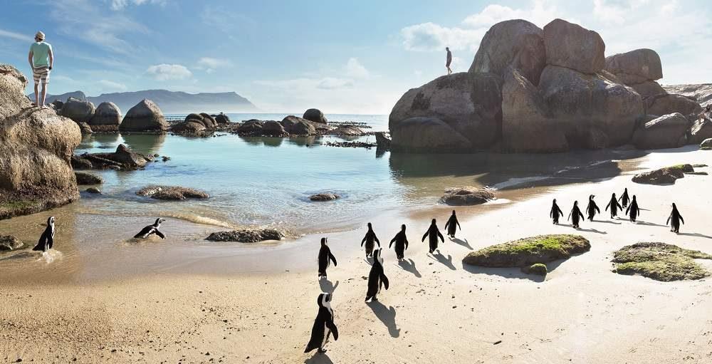 Südafrika Rundreise Safari Strand und Stadt Genuss