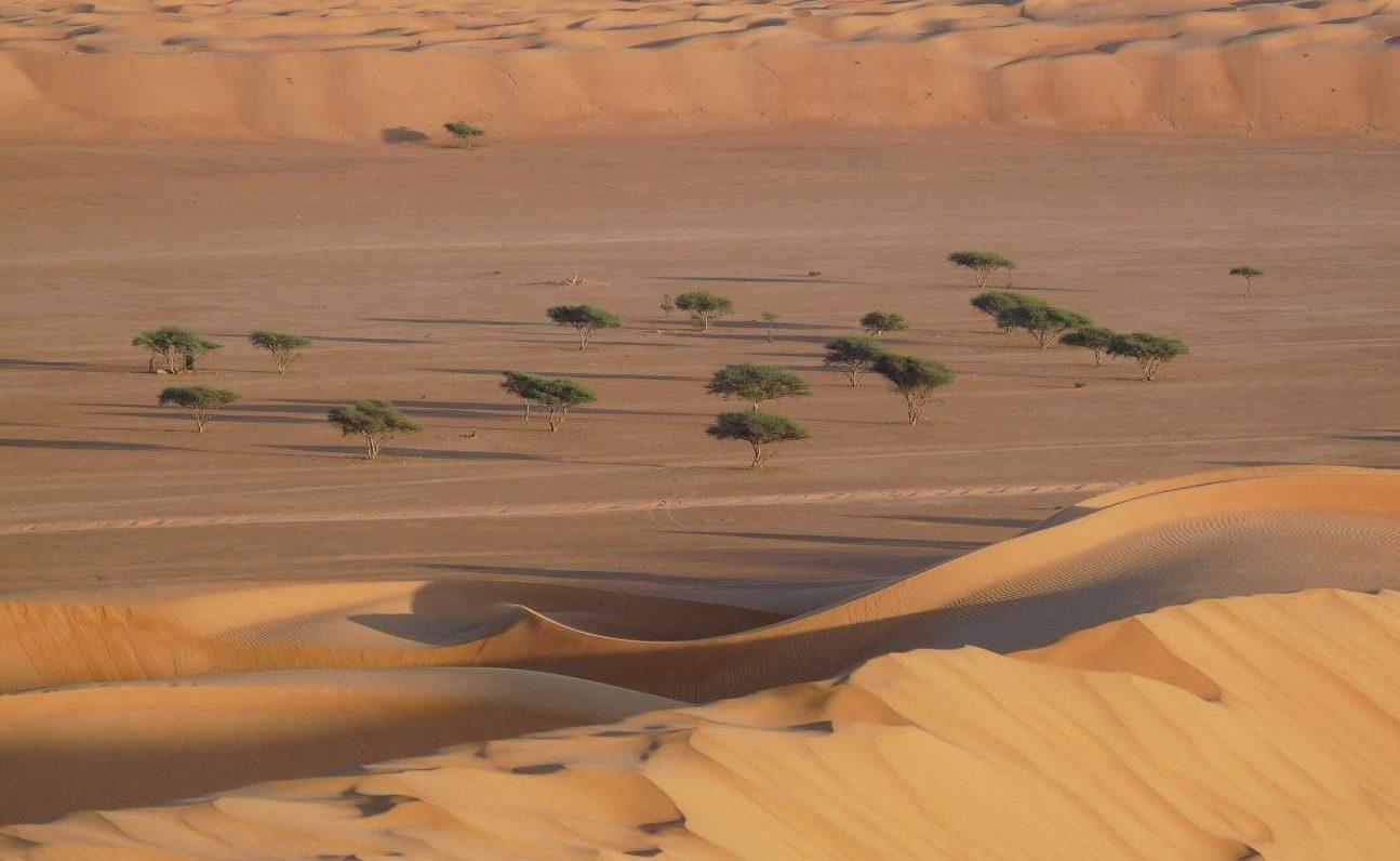 Bäume in den Wahiba Sands