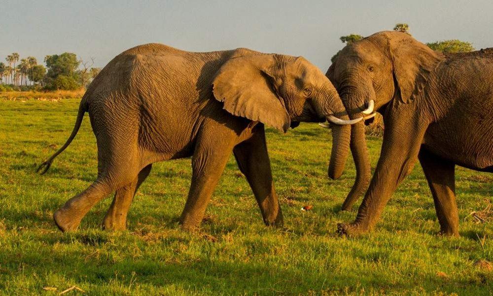 Kurzsafari Viktoriafälle und Chobe Nationalpark