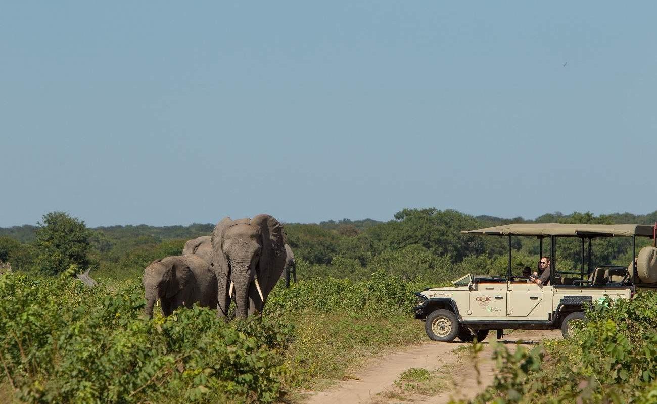 Pirschfahrt im Chobe Nationalpark