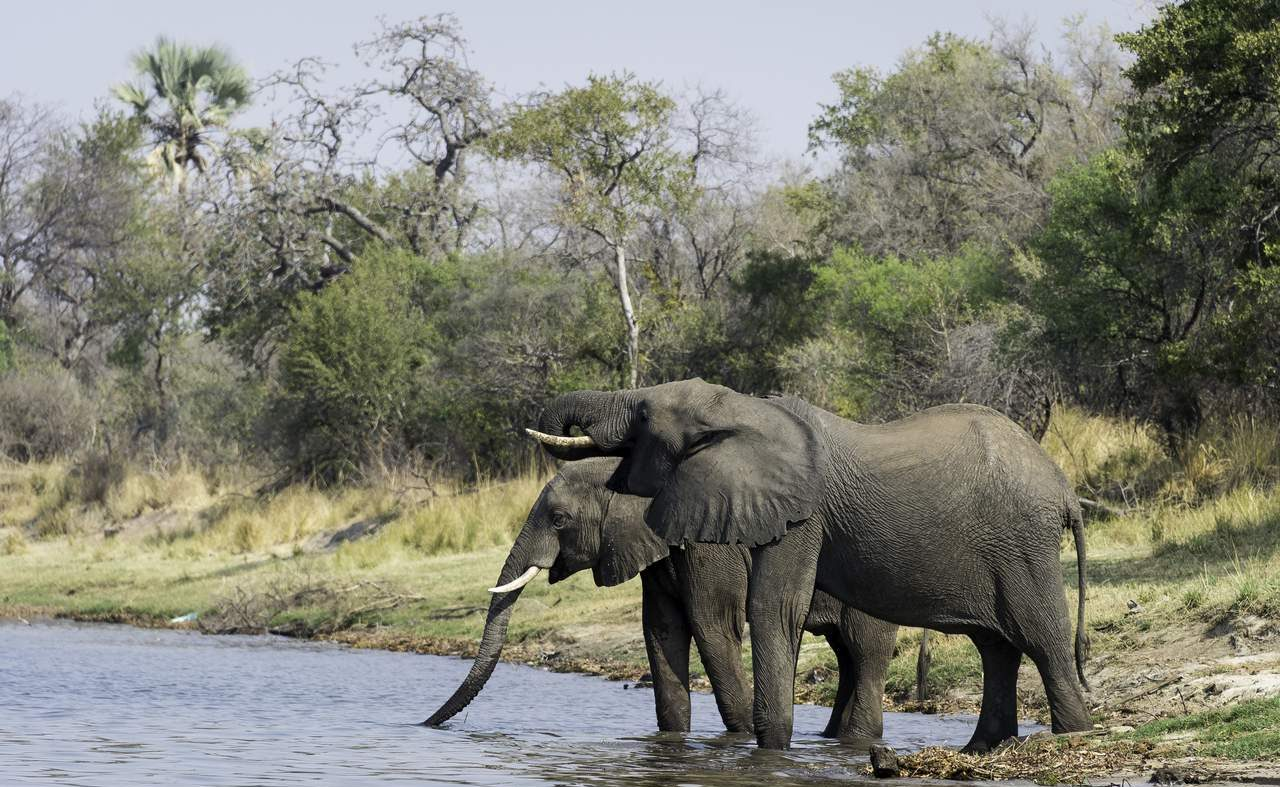 Elefanten an der Chobe River Front