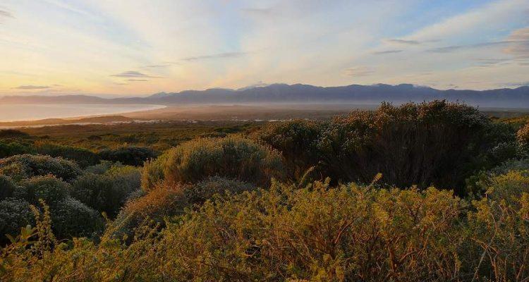 Grootbos Nature Reserve - Luxus und Nachhaltigkeit