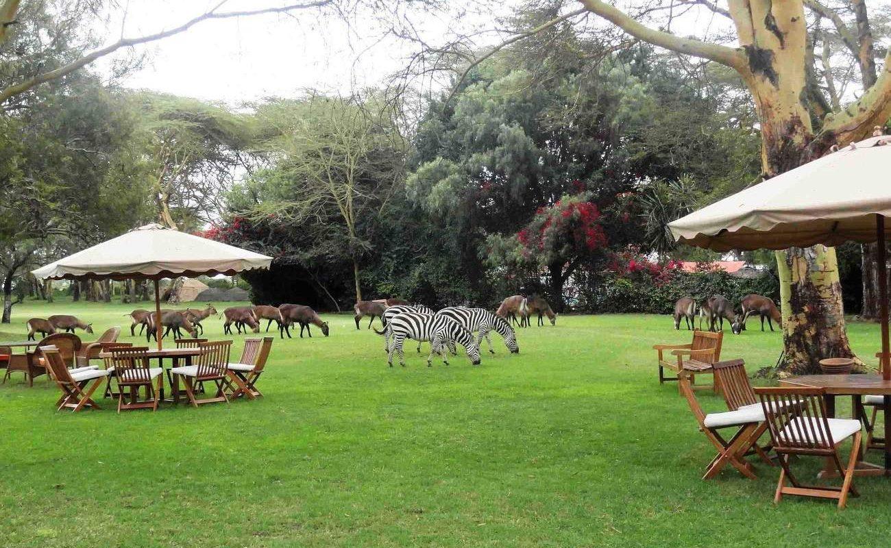 Zebras Naivasha Country Club