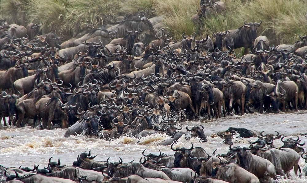 Privatsafari Kenia Amboseli - Lake Naivasah - Masai Mara