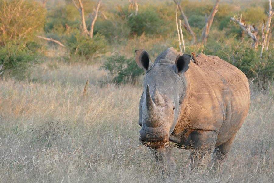 Malariafreie Alternativen zum Krüger Nationalpark