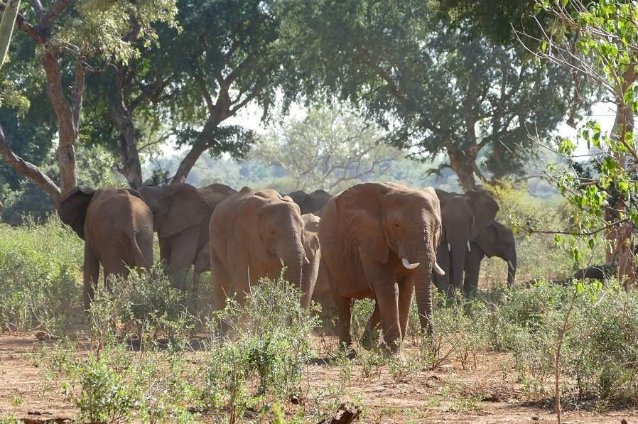 Elefanten in der Makuleke Konzession im Krüger Nationalpark