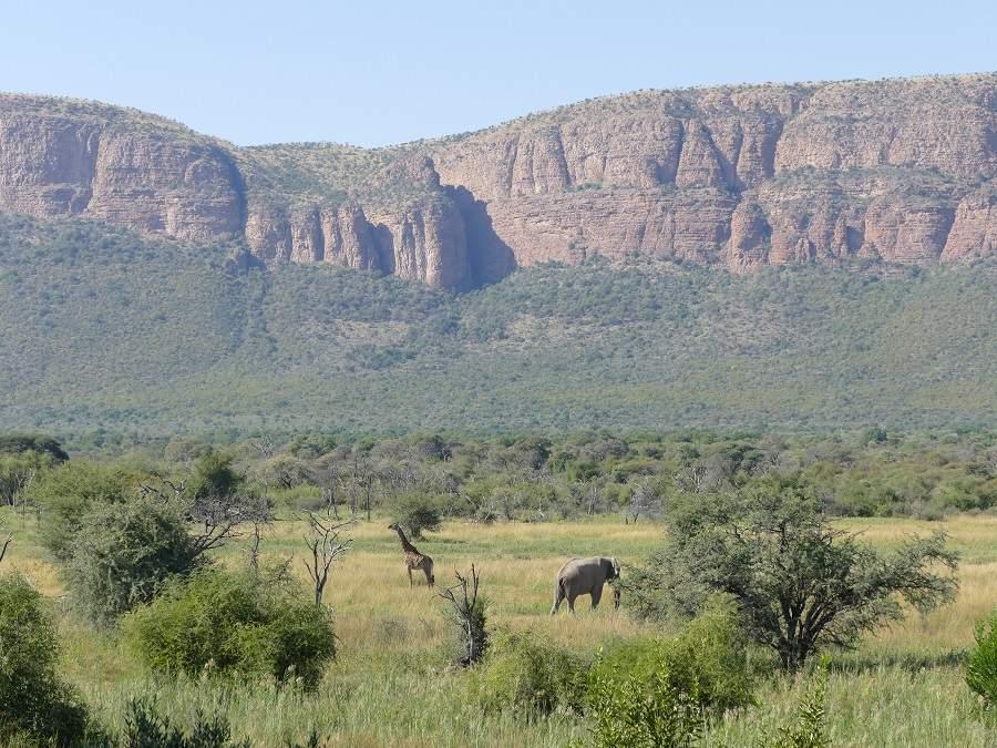 Elefant und Giraffe vor dem Waterberg Massiv