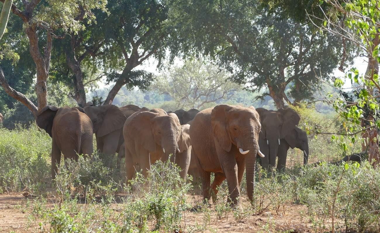 Elefanten in der Makuleke Conservancy