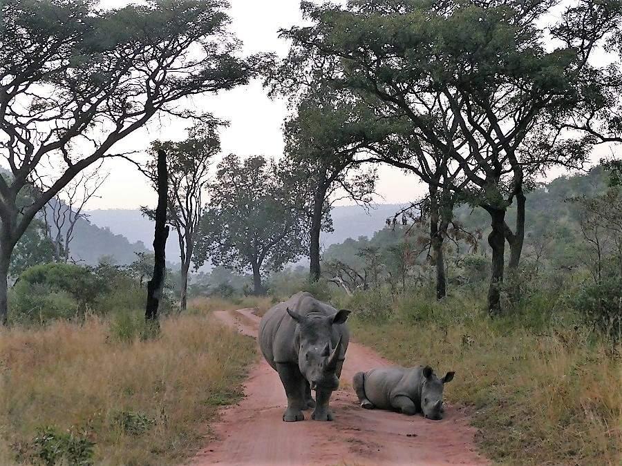 Nashörner im Welgevonden Game Reserve