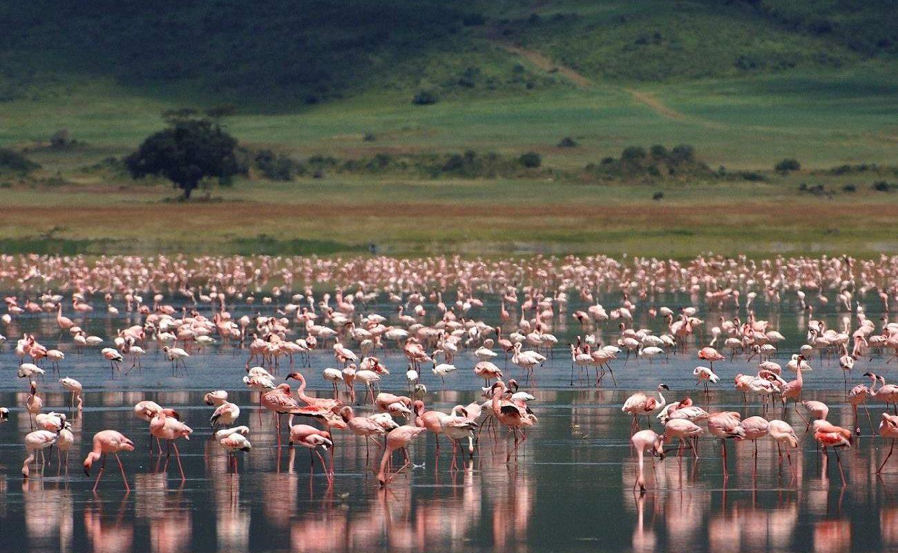Pirschfahrt auf den Boden des Ngorongoro Kraters