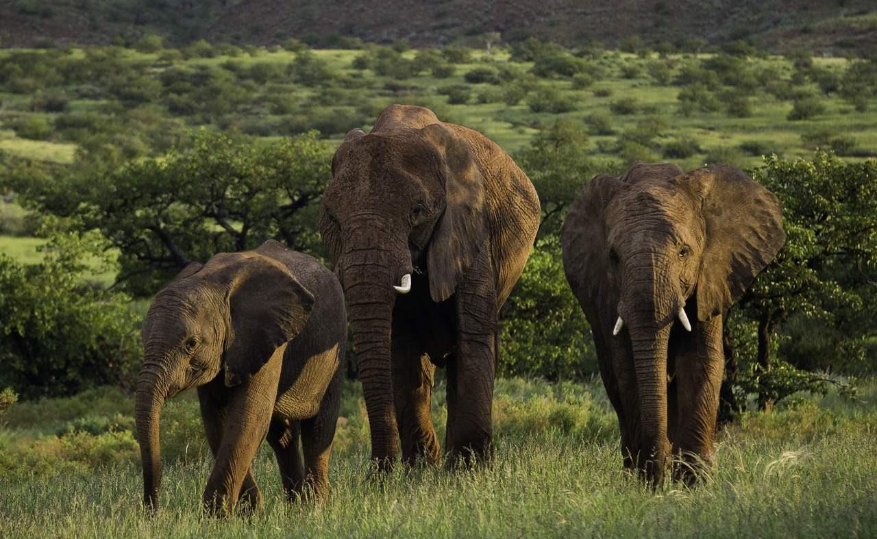 Elefantenherde im grünen Damaraland