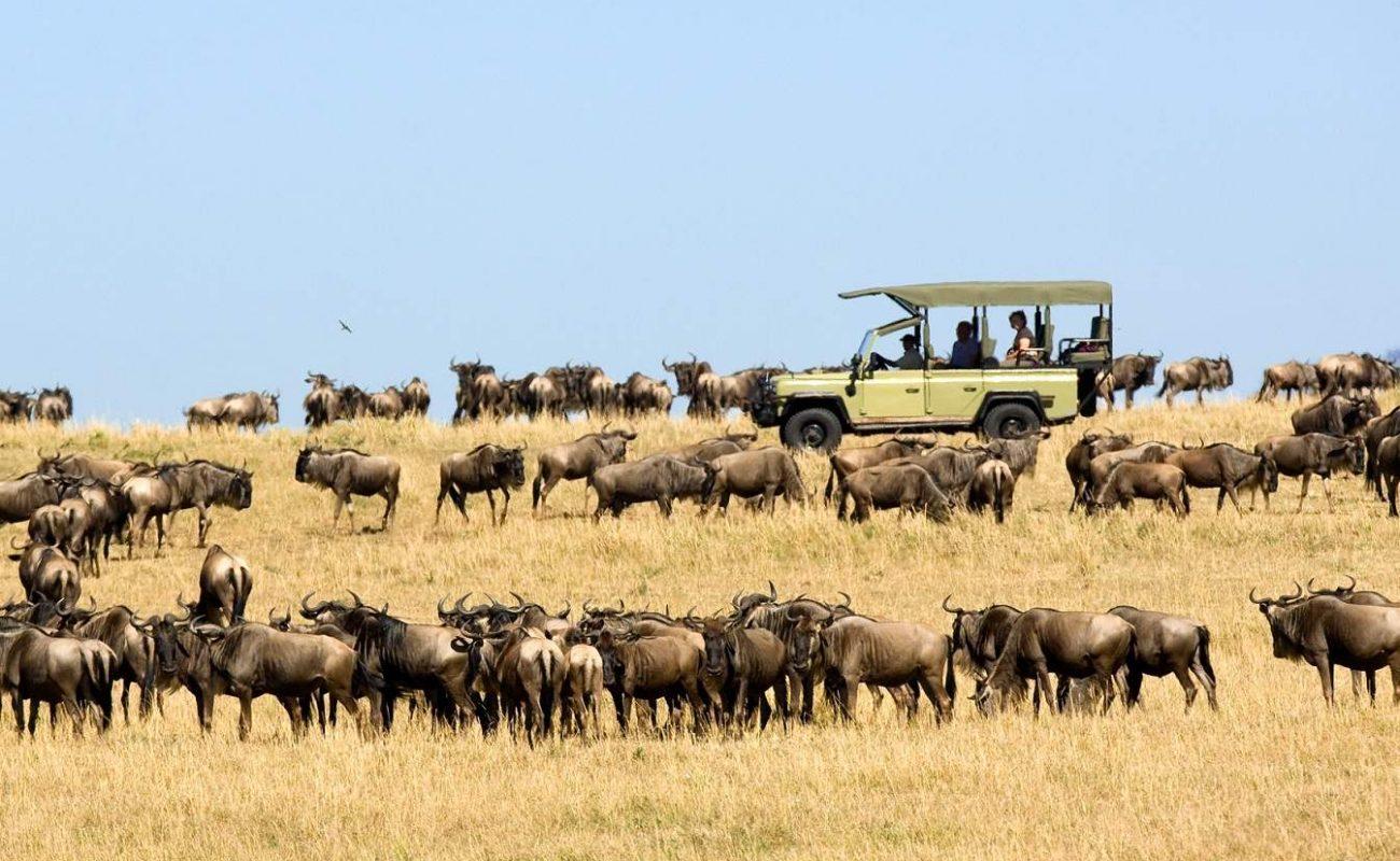 Pirschfahrt während der Großen Migration in Tansania