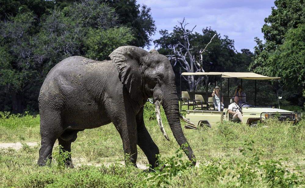 Pirschfahrt Elefant Mana Pools