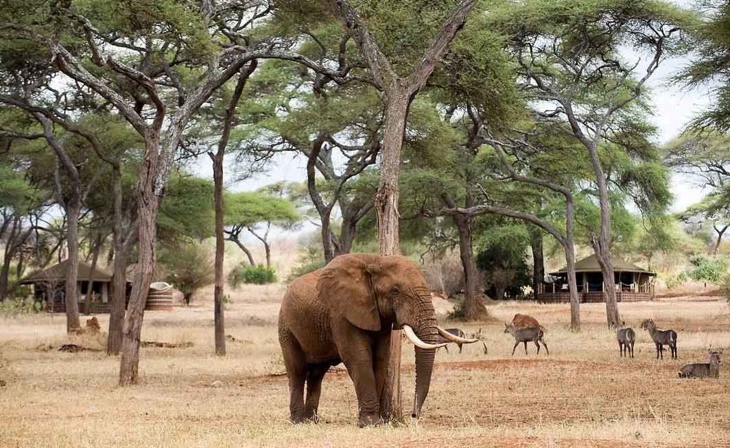 Ein Höhepunkt einer Tansania Safari - Tiere ganz nah im Camp