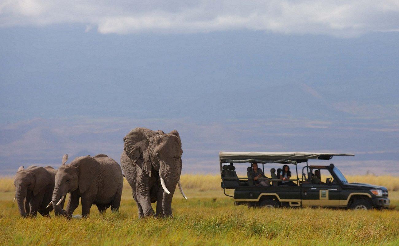 Für seine Elefanten ist der Amboseli bekannt