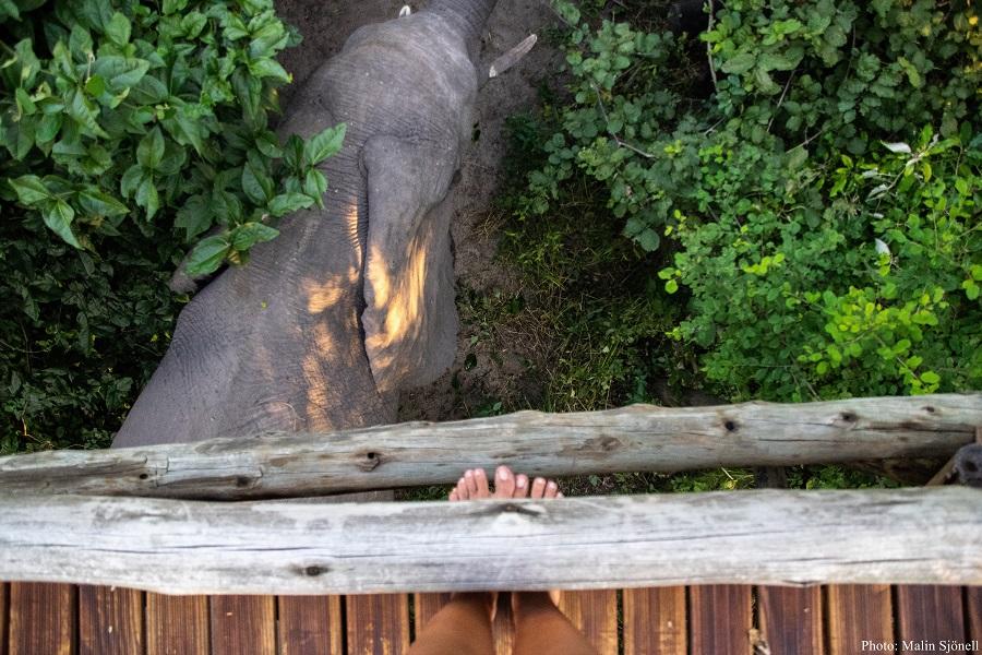 Elefant bei Nambwa Tented