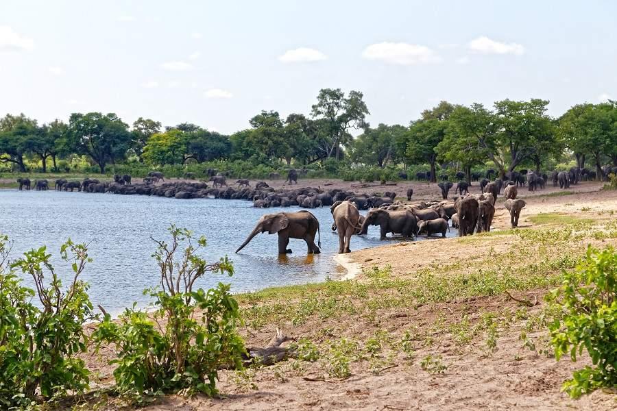 Caprivi Streifen Zambezi Region Bwabwata Elefanten in der Horseshoe Lagune