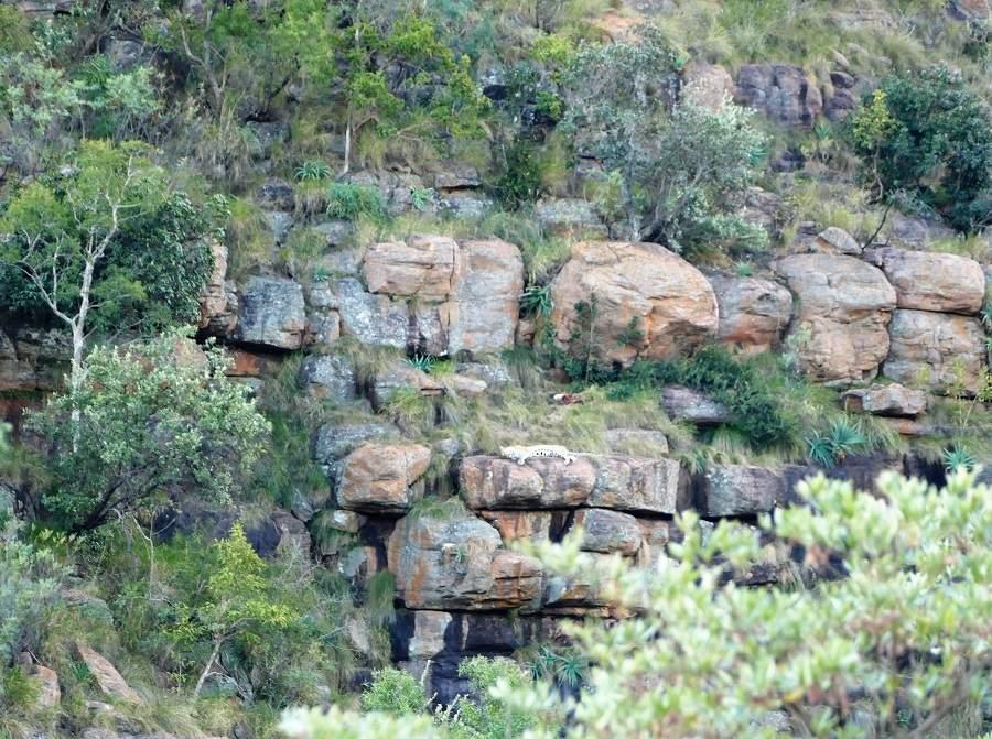 Leopard im Welgevonden Game Reserve