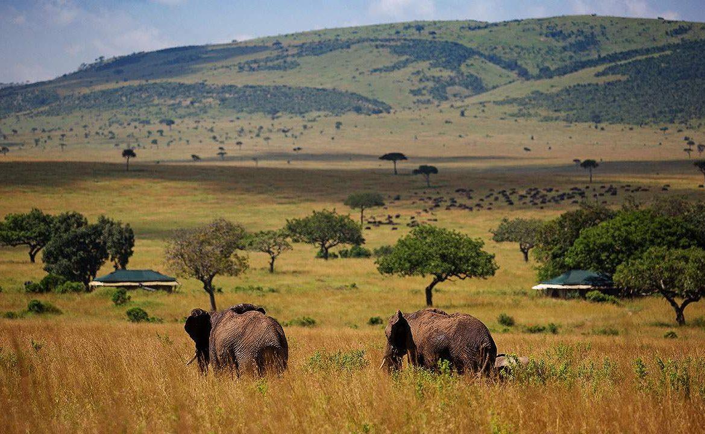 Elefanten vor dem Sand River Mara Camp