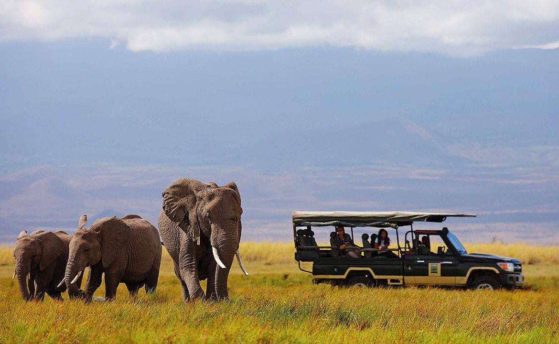Pirschfahrt im Amboseli