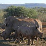 Madikwe Game Reserve – ein unbekanntes Safari-Juwel
