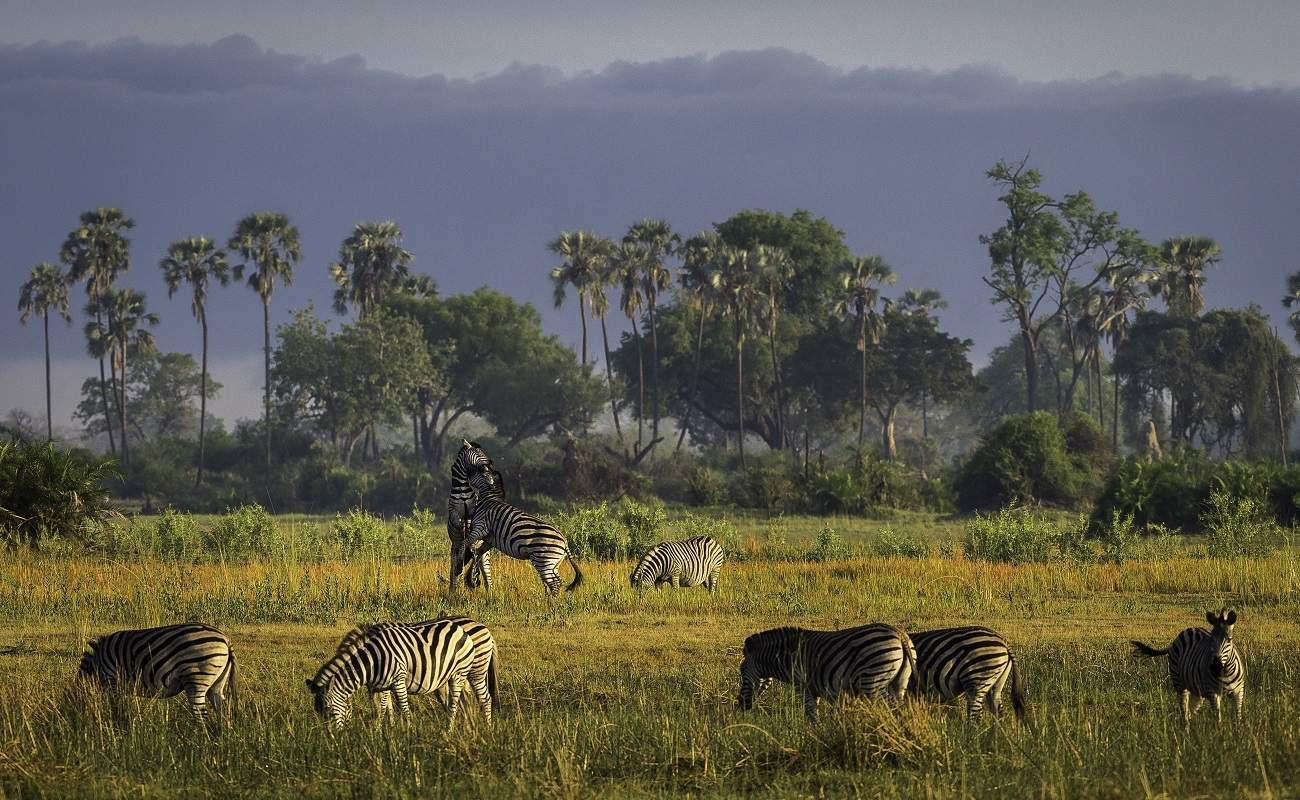 Auf Pirschfahrt in Botswana