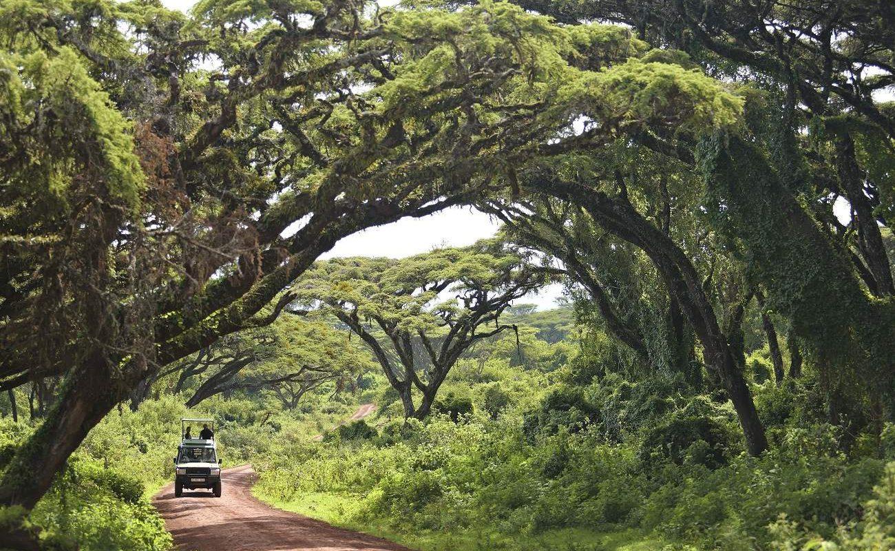 Auf Pirschfahrt im Ngorongoro Krater