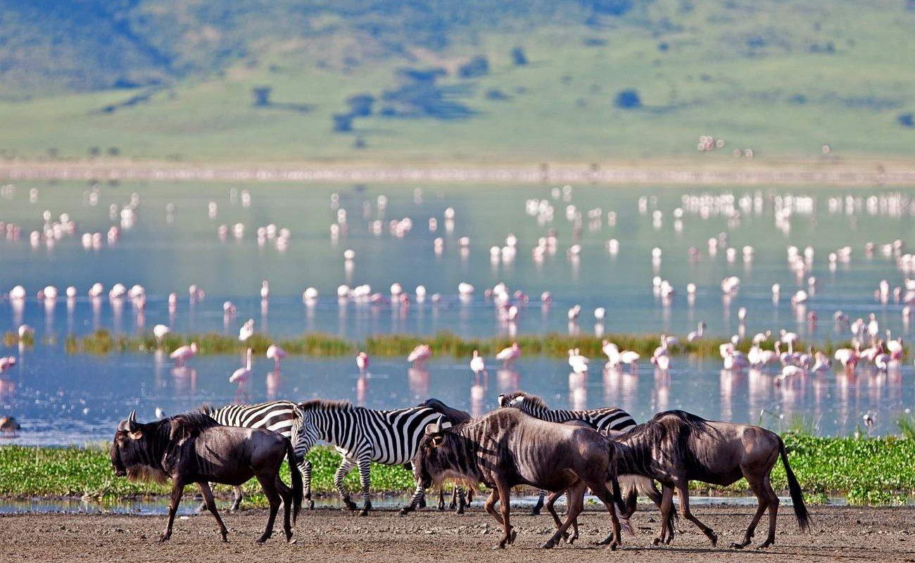 Gnus, Zebras und Flamingos im Ngorongoro Krater