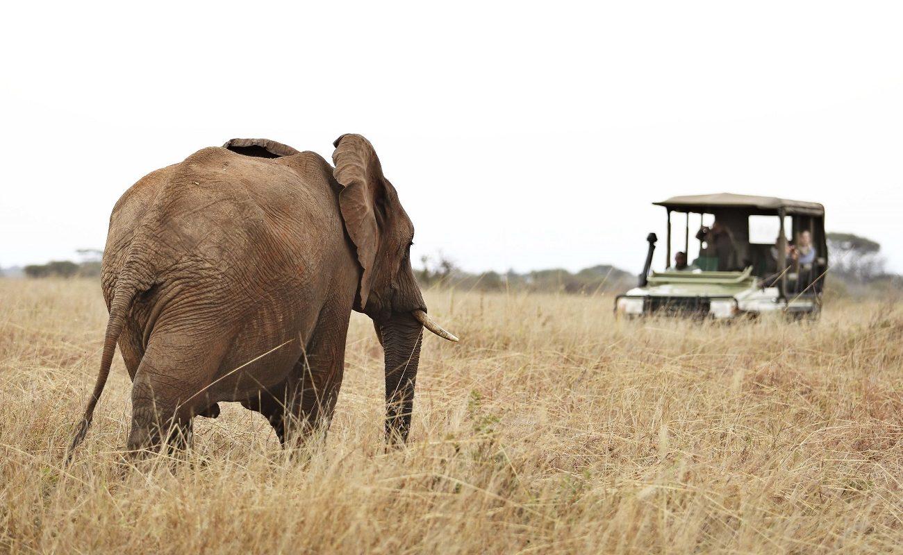 Pirschfahrt im Tarangire Nationalpark