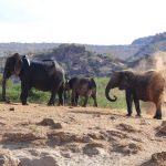 Slow Safari im Tsavo West in Kenia