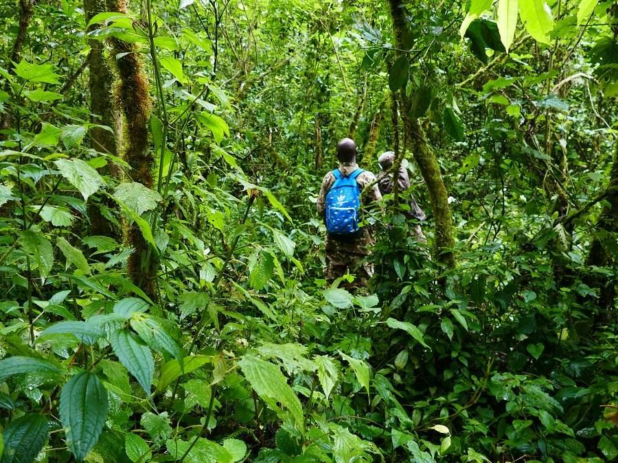 Trekking durch den Bwindi Impenetrable
