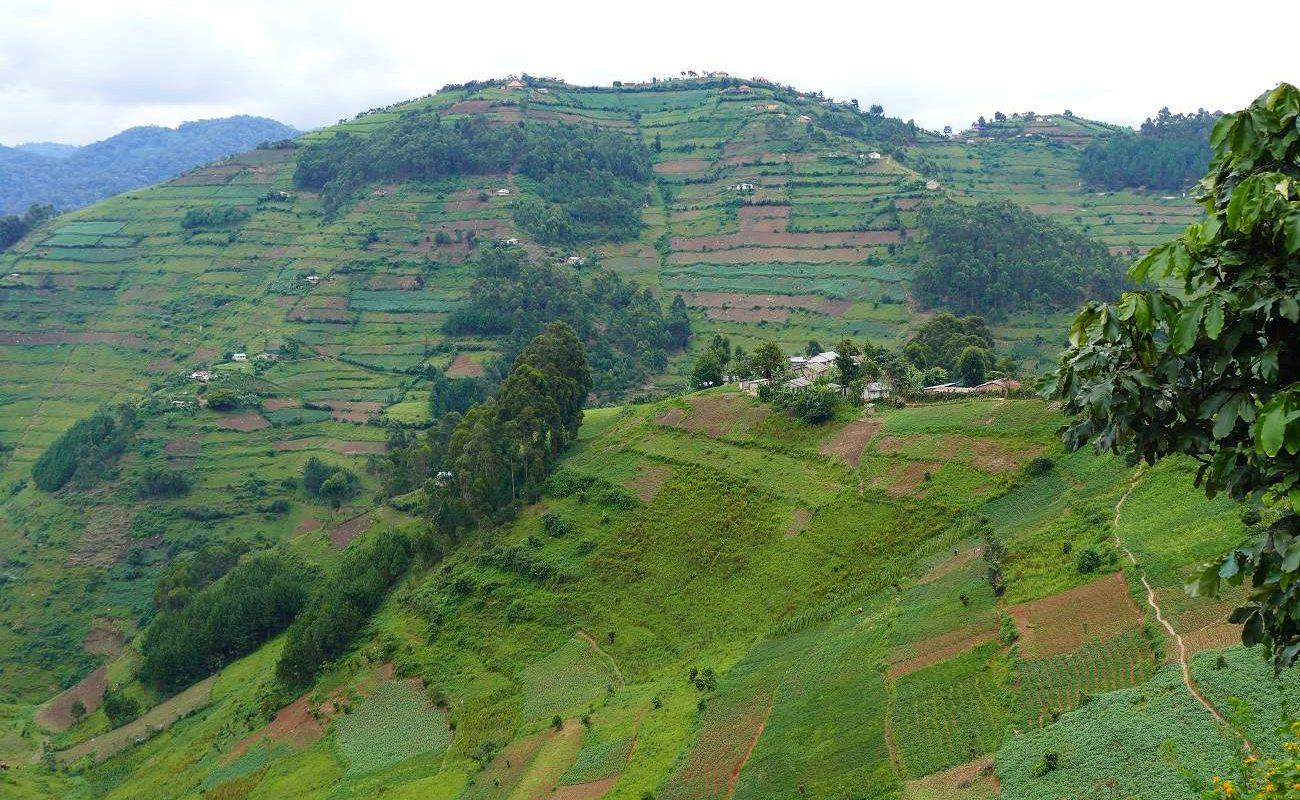 Terrassen am Rand des Bwindi