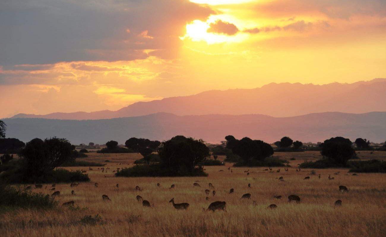 Sonnenuntergang im Queen Elizabeth Nationalpark