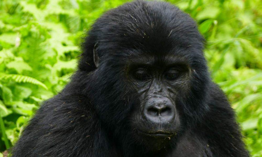 Individuelle Rundreisen durch Uganda mit Genuss Touren