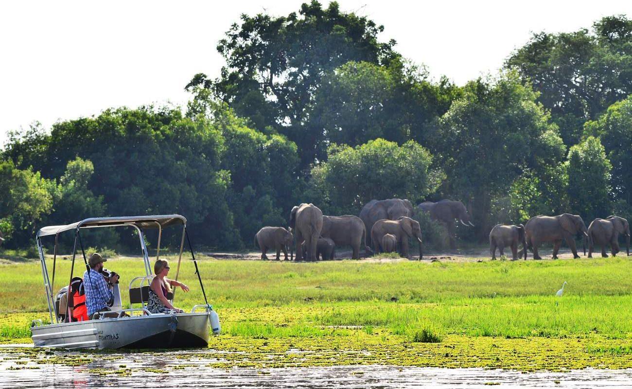 Elefanten im Murchinson Falls