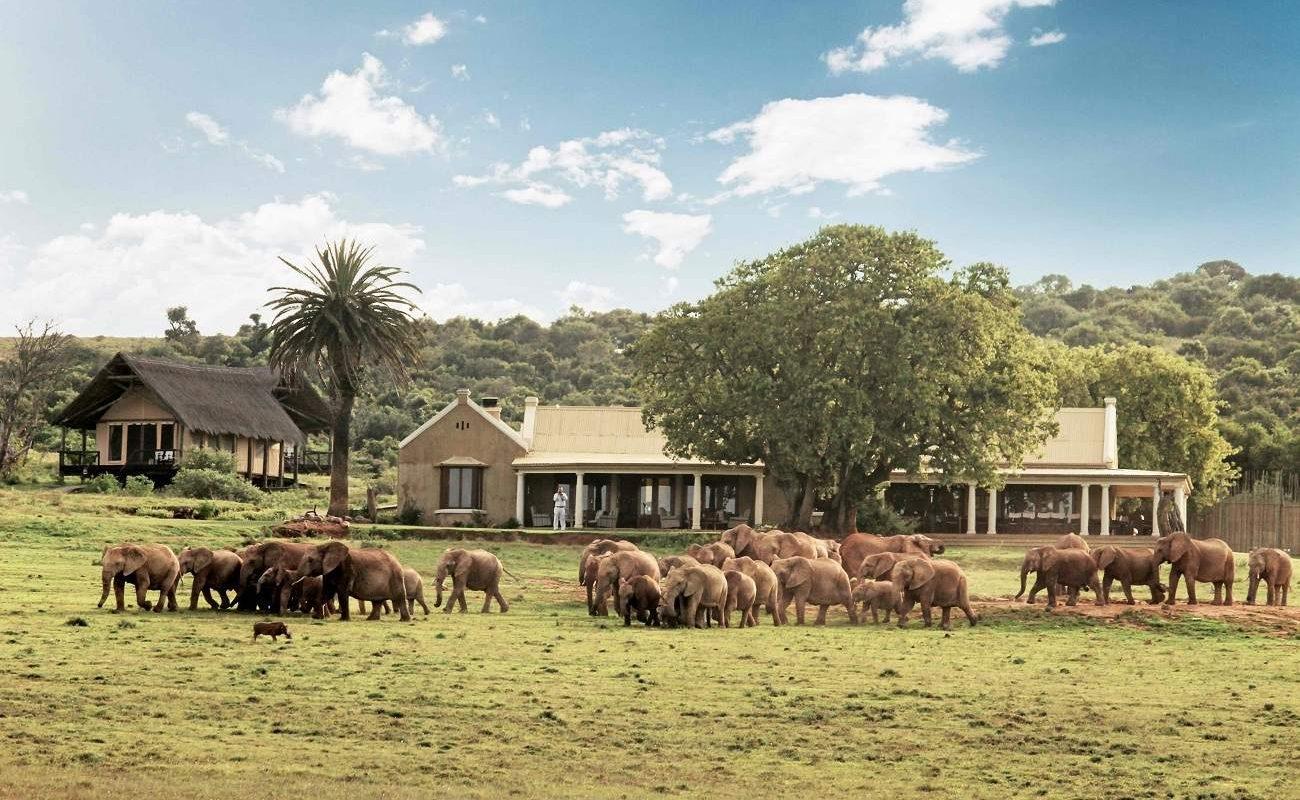 Elefanten vor dem Gorah Elephant Camp