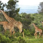 Kariega Game Reserve im Lockdown