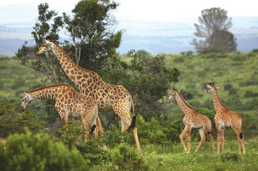 Kariega Game Reserve im Lockdown