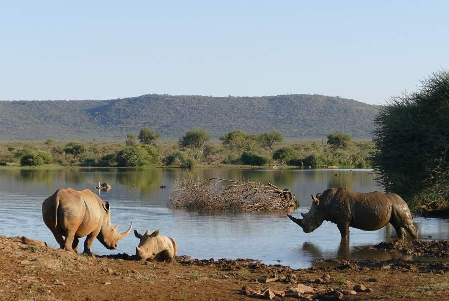 Wasserloch Madikwe Game Reserve