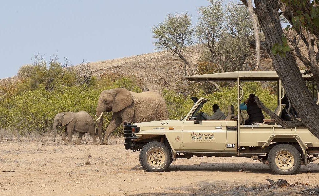 Wüstenelefanten beim Mowani Mountain Camp