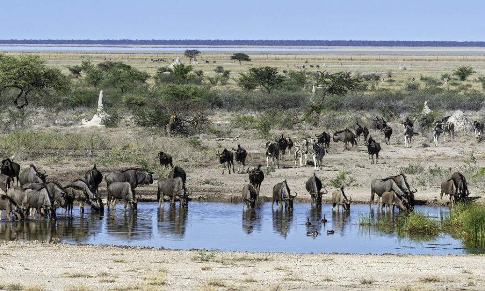 Onguma Game Reserve Namibia