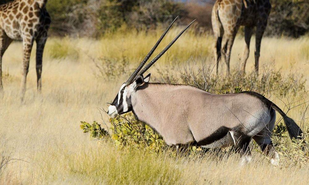 Große Botswana Safari mit Desert & Delta Camps