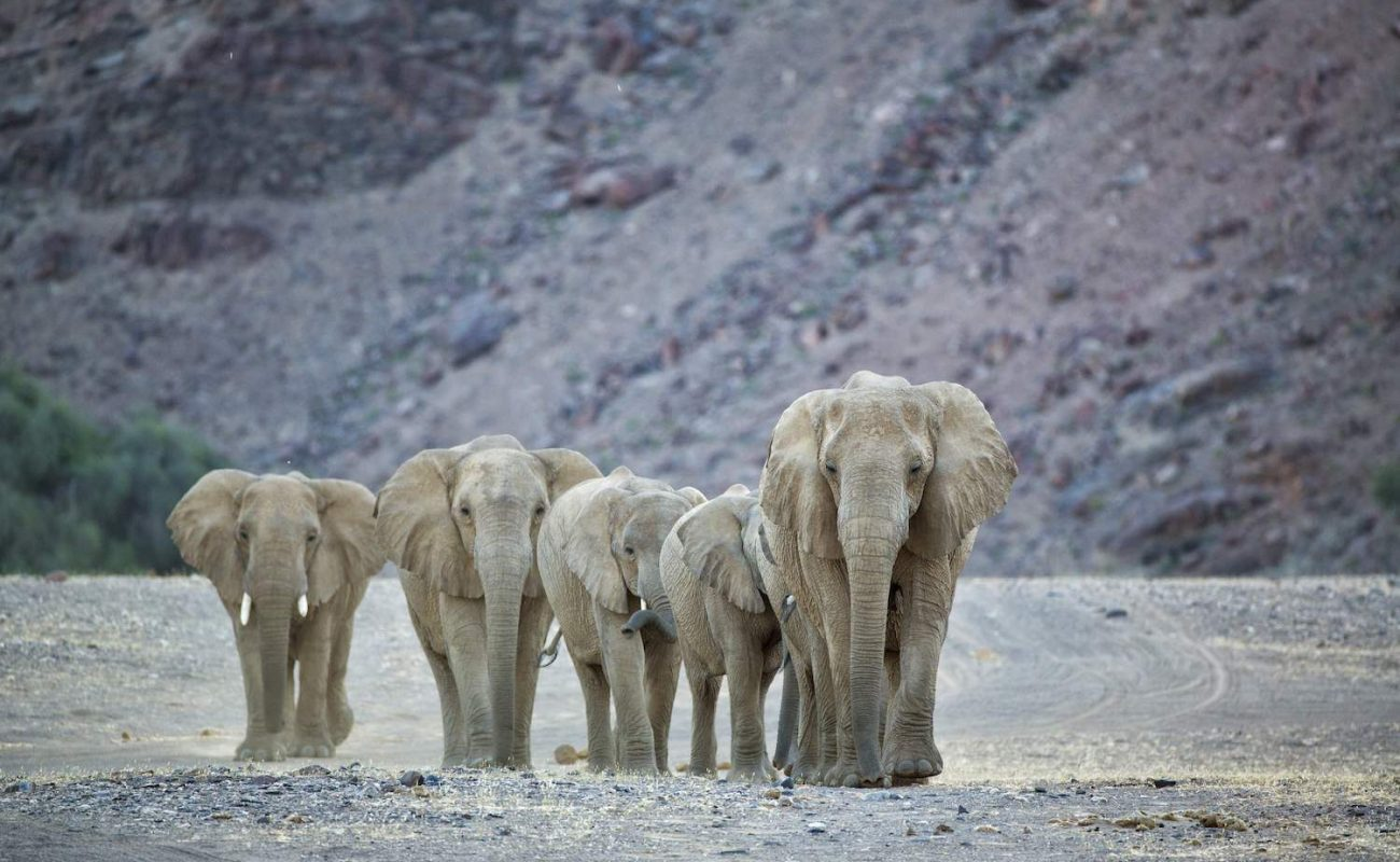 Elefanten im Kaokoveld