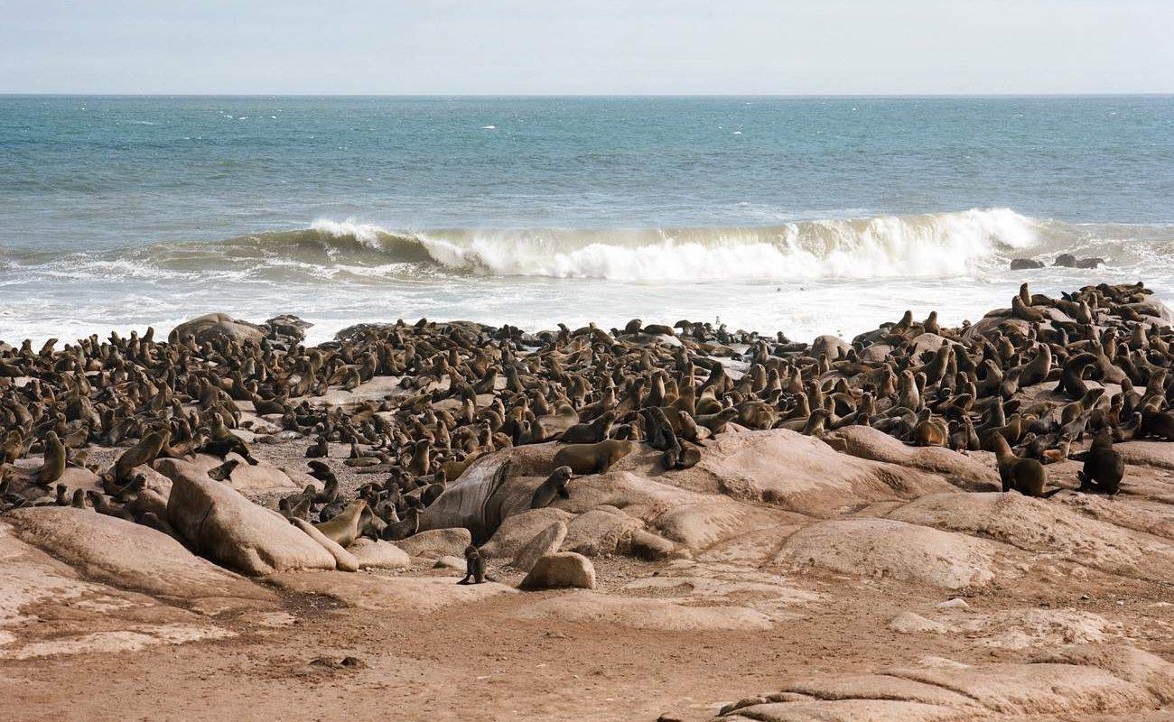 Robbenkolonie bei der Möwe Bucht