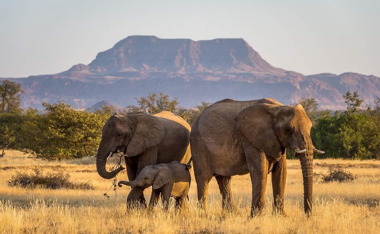 Elefanten im Damaraland