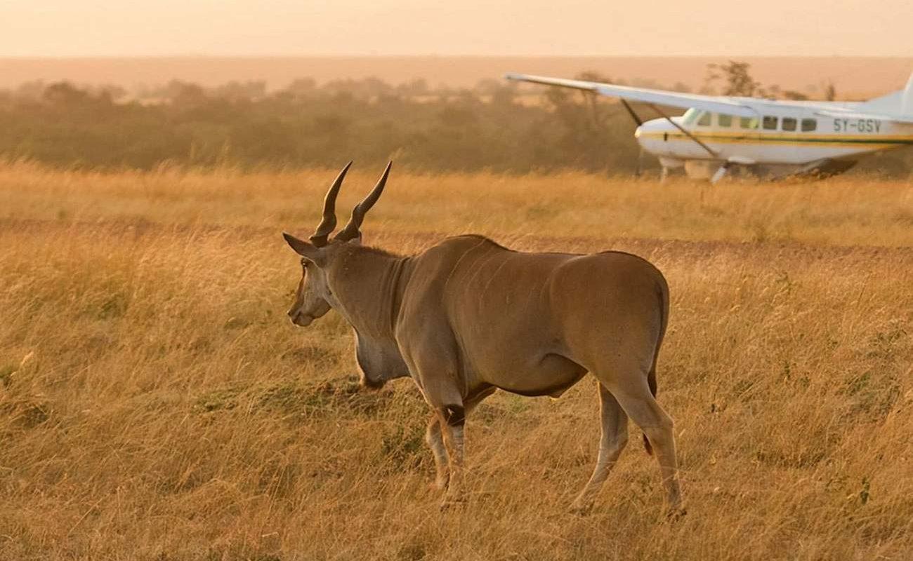 Flugzeug Sky Safari Tansania