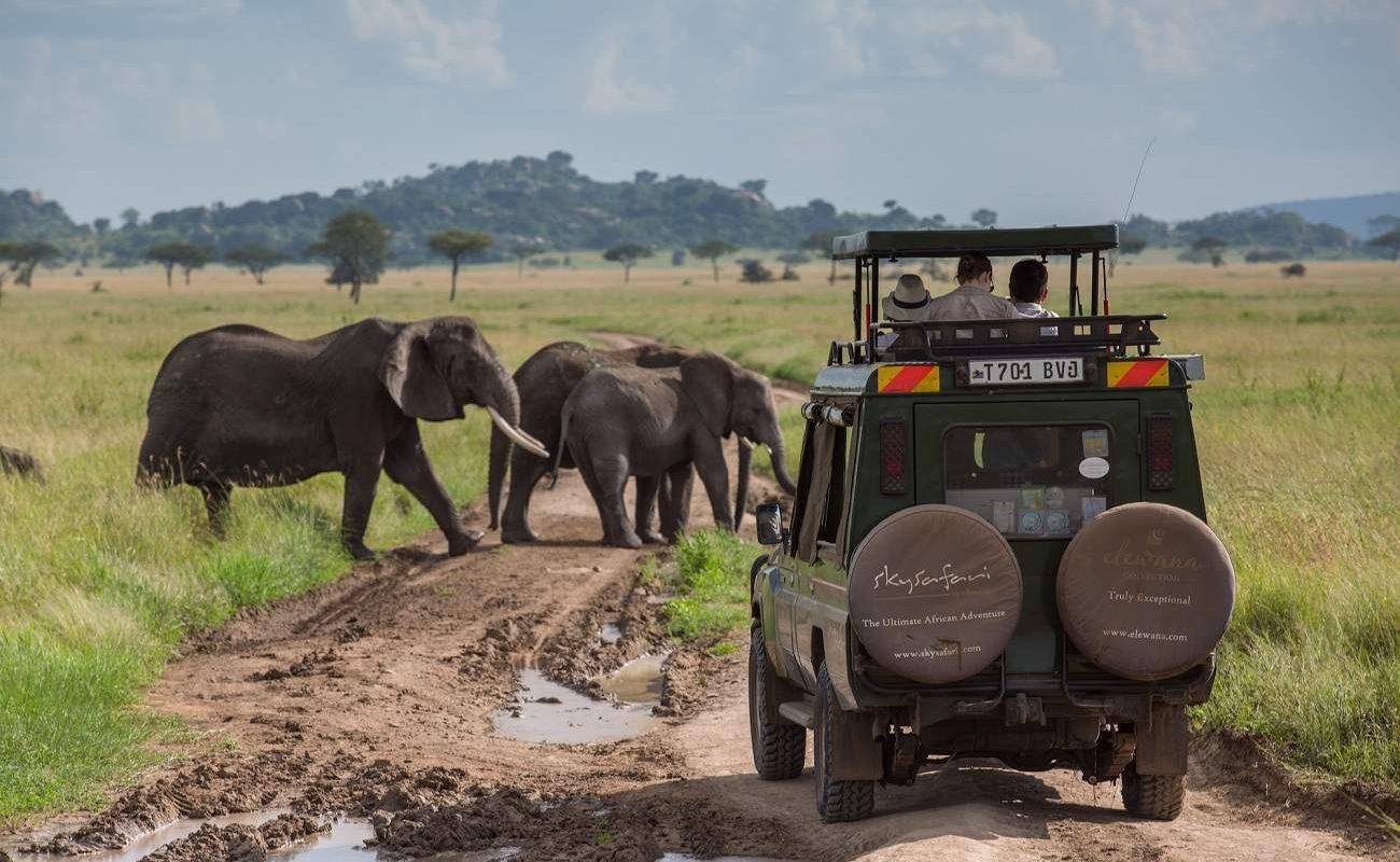 Pirschfahrt in der Seregenti während Ihrer Skysafari in Tansania