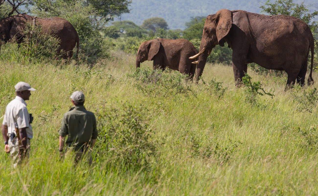 Pirschwanderung mit Elefanten im Tarangire