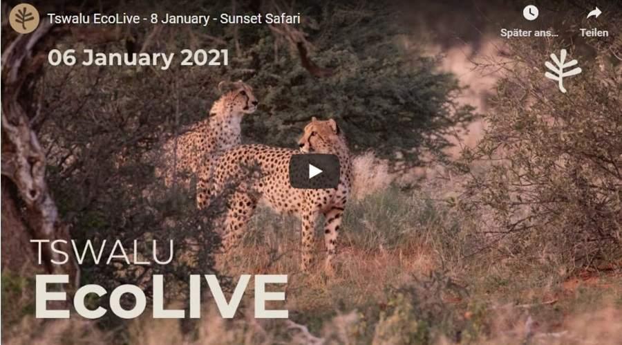 Virtuelle Safari in Tswalu