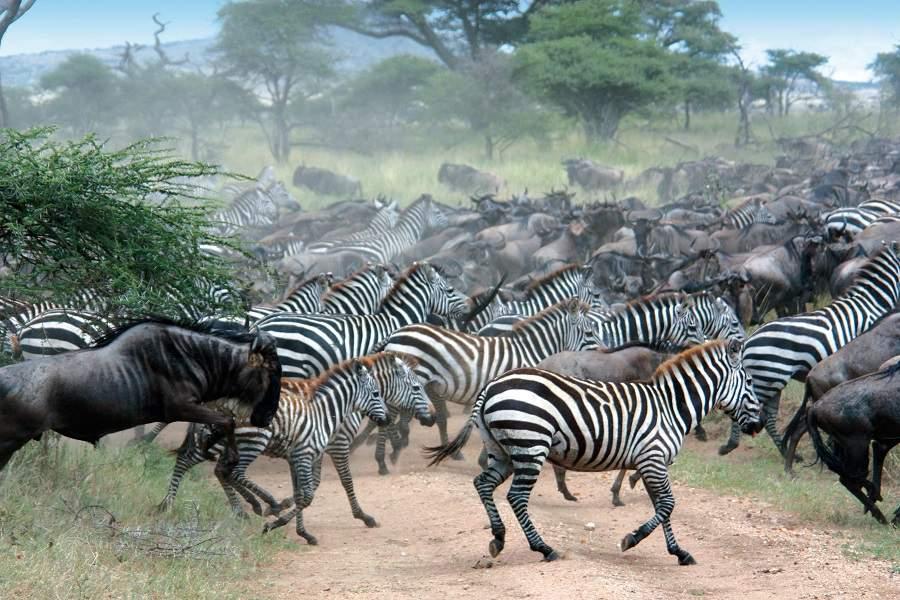Neue Einreisebestimmungen für Tansania